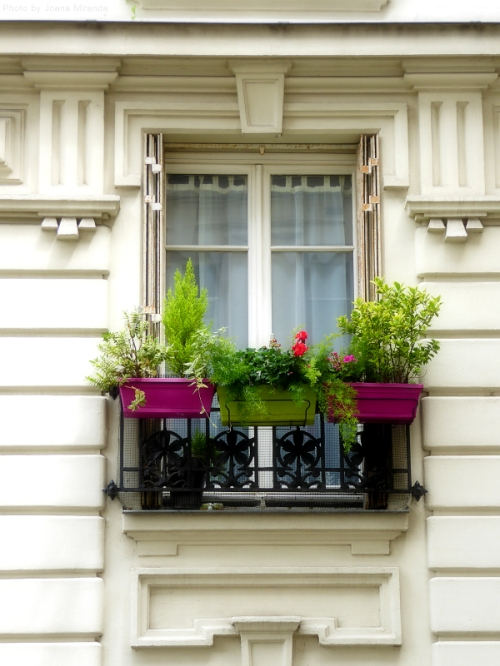 Colorful window boxes in Montmartre
