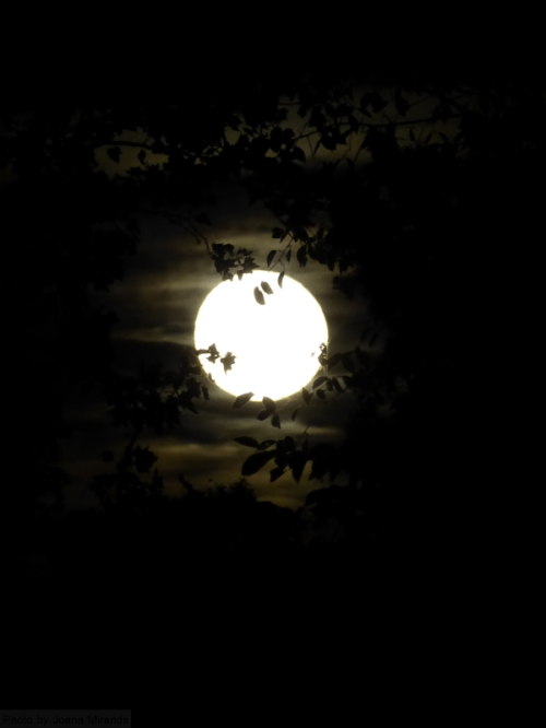harvest-moon-through-the-trees