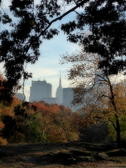 empire-state-building-framed-by-trees