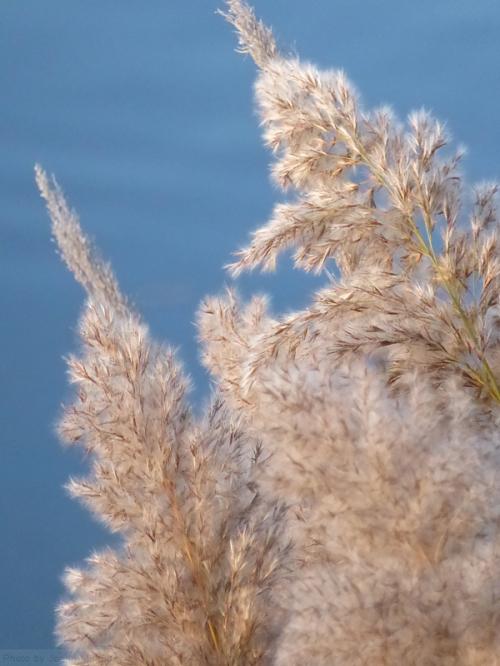 feathery-ferns