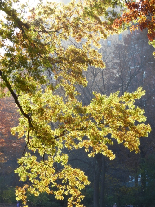 sunlit-fall-foliage-in-central-park