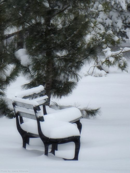 snow-covered-benches-in-central-park